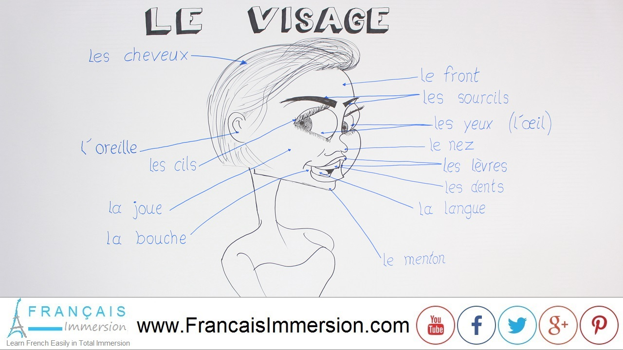 French face parts body vocabulary le visage franais immersion french lesson face parts franais immersion pooptronica Image collections