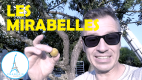 Les Mirabelles – Learn French Language