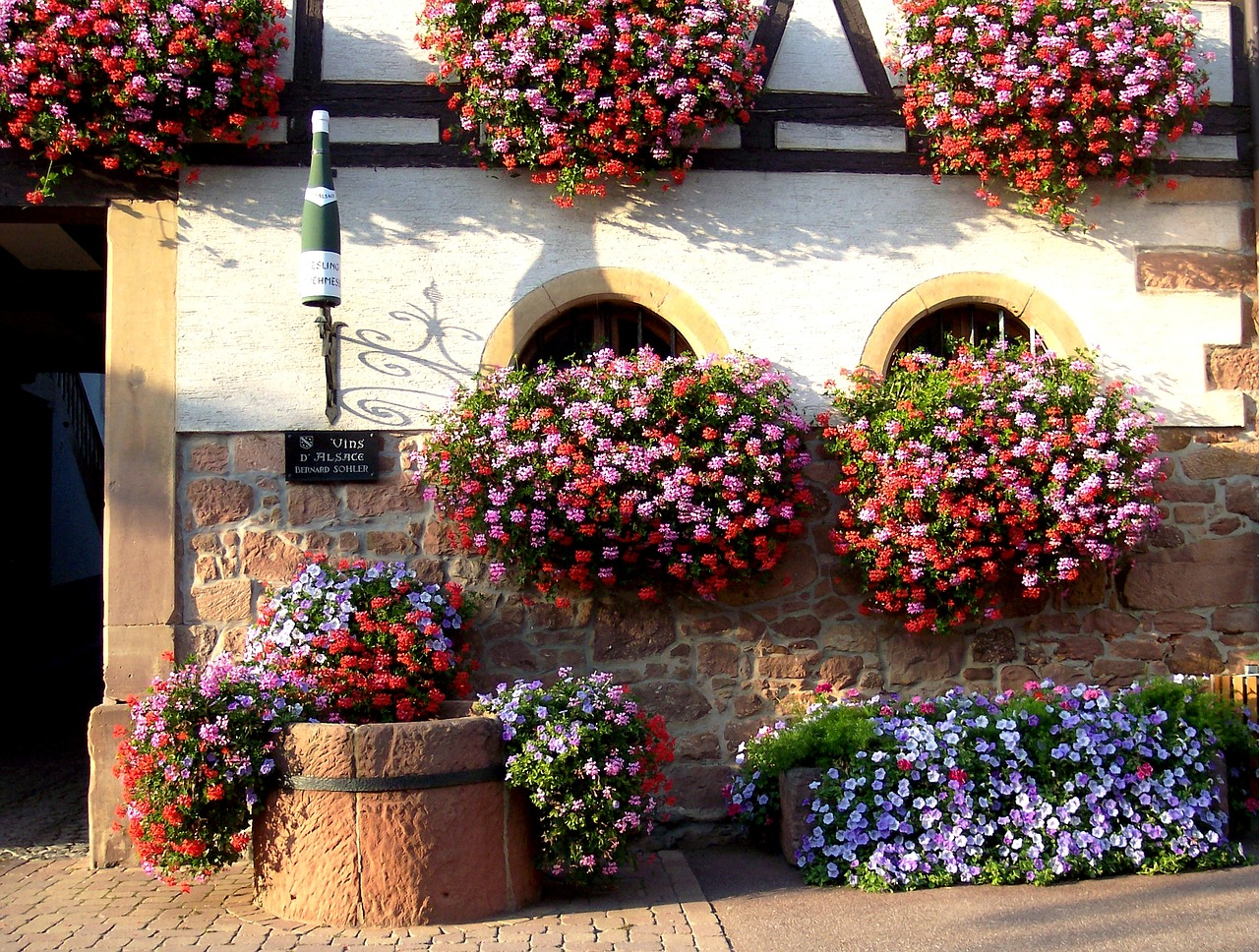 Flowers and wine in Alsace - French Immersion Homestay Thomas - Français Immersion