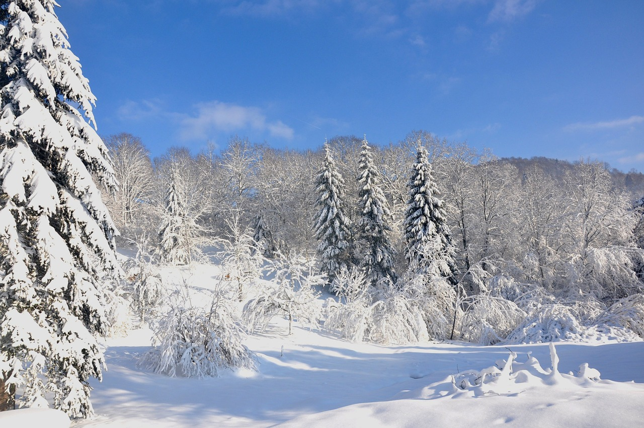 Landscape of Les Vosges in Winter - French Immersion Homestay Thomas - Français Immersion